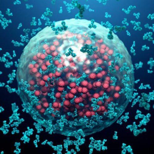 ep pesquisa anticorpos covid19 2